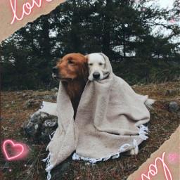 dog casal freetoedit