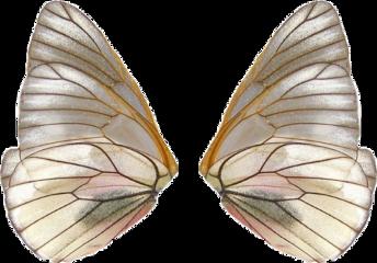 fairy fairywings fairycore aesthetic vintage wings useit sticker freetoedit