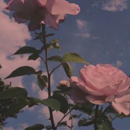 freetoedit flowersaroundme