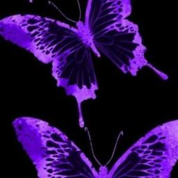 indie alternative vintage aesthetic butterfly butterflyaesthetic indieaesthetic indiekid kidcore indiegirl indiekidfilter indievibes y2kaesthetic 2000saesthetic 2000s y2k freetoedit