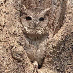 owl tree grey freetoedit
