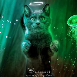 freetoedit cat glow animal surreal