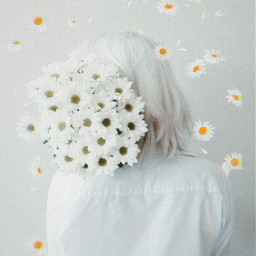 white aesthetic whiteaesthetic flower freetoedit rcchamomilesanddaisies chamomilesanddaisies