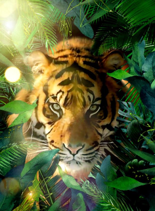 #myinspiration #tropical #tropic  #tropicalplants #jungle #exotic #tigre #tiger #lumiere #reflet #wppzoo #wppnature #wppanimal #wallpaperedit