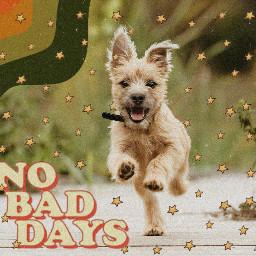 cute animal dog running adoradle fury fluffy nobaddays stars freetoedit