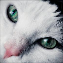 cat kitty petsandanimals