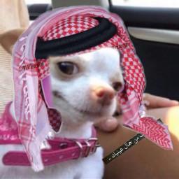 арабы freetoedit
