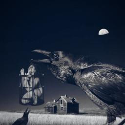 freetoedit raven blackandwhite monochrome abandonedhouse