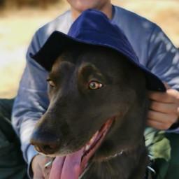 dogislove walker friendship freshair freetoedit