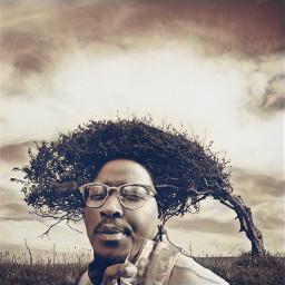 freetoedit afrohair funny monochrome tree