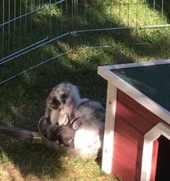 freetoedit bunny schnuffl cute