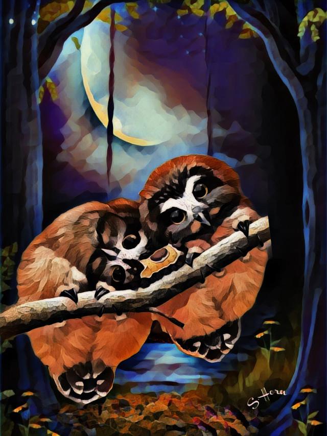 #Owls at night