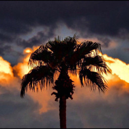 angeleyesimages sunset beautifulsunset picoftheday nikon nikonphotography palms palmtrees travel traveler traveling travelphotography freetoedit imstagram picsart instagramers canon canonphotography clouds