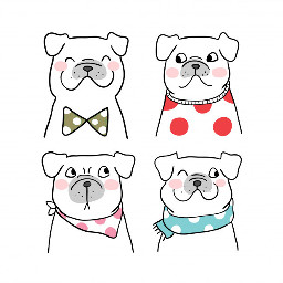 adorbs adorable cute scarf hankerchief sweater bowtie doggos dogs dog remixit freetoedit