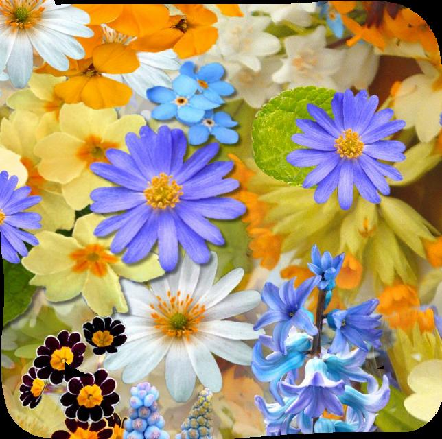 #freetoedit #wallpapers #fondosdepantalla   #photography #photographer #myphoto  #nature #landscapes #fondos #flowerpower  #sunsetsilhouette  #naturalbeauty    #heypicsart    #wallpaperedit #freetoedit #myphotography  #landscape  #travel #flowers #flowerphotography  #backgroundchange  #backgrounds