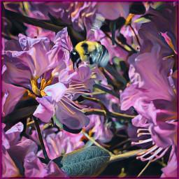 freetoedit flowers spring bumblebee art