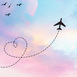 fly plane pink blue birds bird heart sky outside sunset idkgotbored fun freetoedit