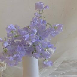 accrestart acc restart cottagecore lightcottagecore aesthetic bluecottagecore blue blueaesthetic