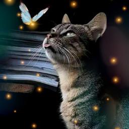 cutecat cat lovecat beautifulcat catedit freetoedit