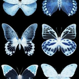 butterflies butterfly alternative indie indiekid blue 00s aesthetic 2000score indiecore 2000s wallpapper indiekidfilter indieaesthetic 00saesthetic 2000saesthetic freetoedit