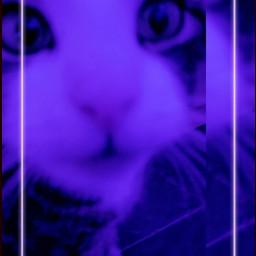 cute cat purple neon snapchat filter aesthetic snapchatfilter may kawaii eyes animal meow