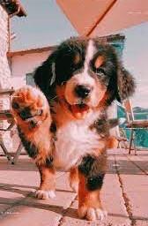 doggysayshello