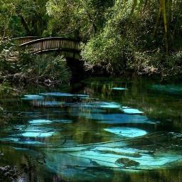 nature bridge lake pretty mothernature trees ninahayess freetoedit
