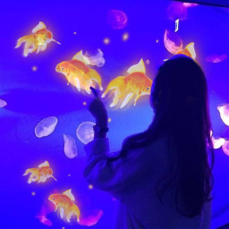 fish tank srcgoldenfish goldenfish freetoedit
