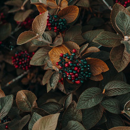 freetoedit flower plant remix replay photography interesting red color nature