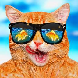 goldenfishstickerremixchallenge badkitty goldfish cat dinnertime sunglasses water bubbles srcgoldenfish goldenfish freetoedit