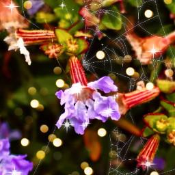 myphoto myedit flowers naturelovers floweraesthetic flowerart bokehbrush floweroftheday freetoedit