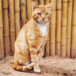 cat catlover catsofpicsart bamboo stare photography animal