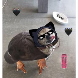 swag dog freetoedit