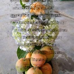 not srcmusicalnotes musicalnotes
