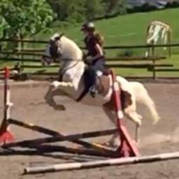 reiten pferd springreiten judy