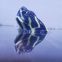 mr_turtleman