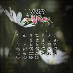june junio calendar calendar2021 calendario calendario2021 margaritas daysi flores flower movie pelicula freetoedit srcjunecalendar2021 junecalendar2021