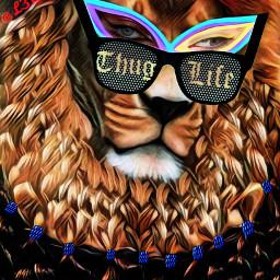 lion glasses eyes badlandsmagiceffect braids srctrendyeyestickers trendyeyestickers