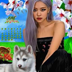 rose picsart picsarteffects freetoedit srcjunecalendar2021 junecalendar2021