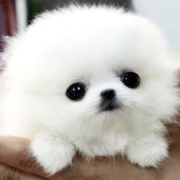 interesting cute