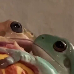 froggie frogs spacer cute