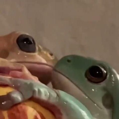 PLSSSS THIS IS SO FRICKIN CUTEE #frogscute #froggy #froggies #lgbtq #fyp #frogs