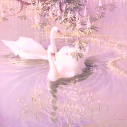 swan aesthetic