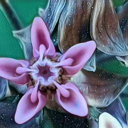 photo flower fxeffect freetoedit