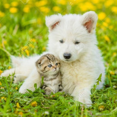 puppies708