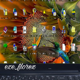 klein. freetoedit klein srcwindowsscreen windowsscreen
