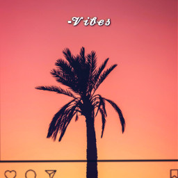summer vibes palmtrees palmtree nature sunset ninahayess freetoedit