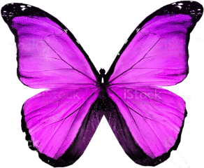 butterfly purple violet violetbutterfly purplebutterfly art design decorating freetoedit