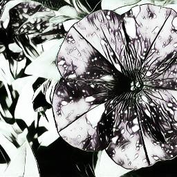 flower pinks art edits