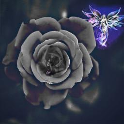 freetoedit interesting art flower rose